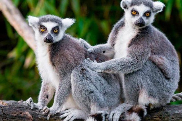 Μαδαγασκάρη - Αφρική - Ταξίδι