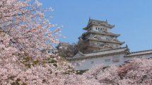 himeji_castle_sakura_japan