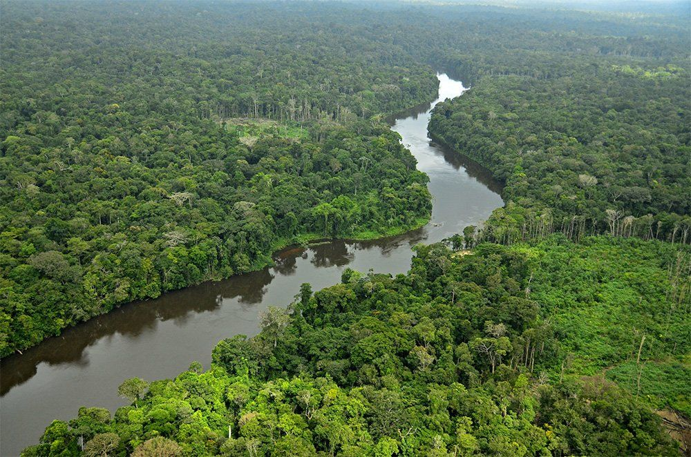 suriname national park
