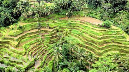 Bali - Ubud - Rice fields - travel