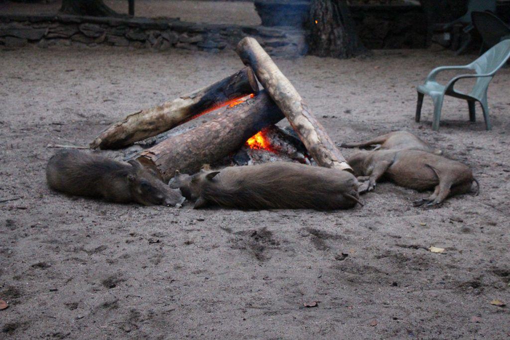 Swaziland - safari - mlilwane - rejser