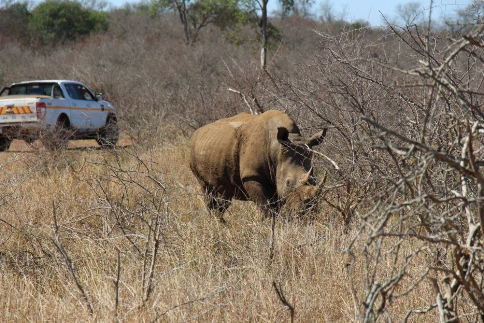 Swaziland - safari - rejser