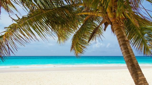 Strand, sol, palme - rejser