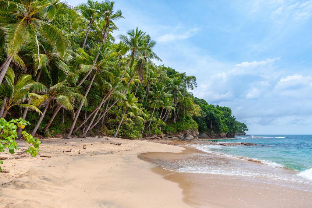 Panama Bocas del toro red frog beach Rejser