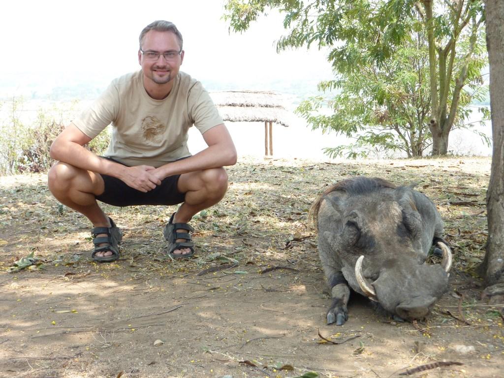 Afrika Uganda Vildsvin Rejser