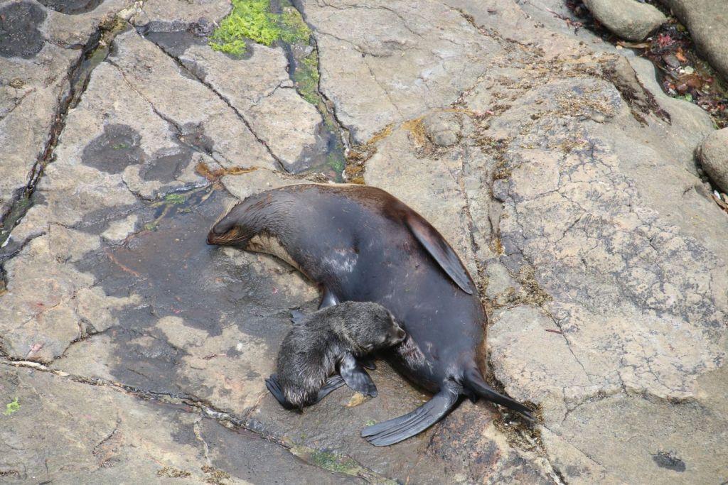 New Zealand Moriake Seal Travel