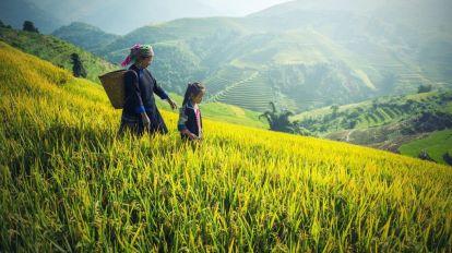 Cambodja Mark Bjerge Rejser