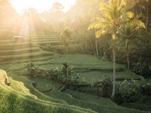 Bali Rismak Reise
