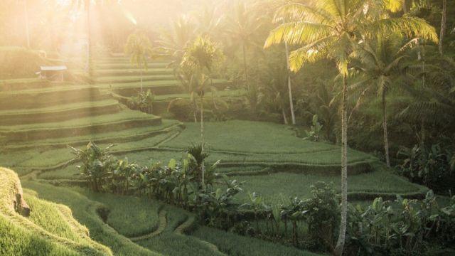 Bali Rismak putovanja