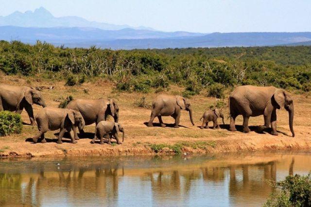 Južnoafrička Republika Kruger Safari Elephants Travel
