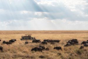 Afrika Tanzania Serengeti Safari Rejser