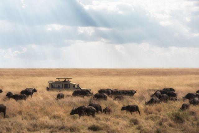 アフリカタンザニアセレンゲティサファリ旅行