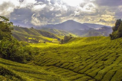 Malezya Cameron Highlands Manzara Seyahati
