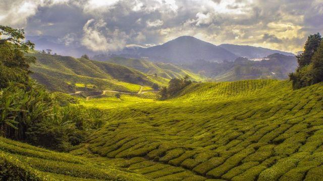 Malezija Cameron Highlands Landscape Travel