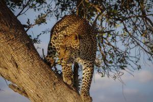 Kenya Safari Rejser