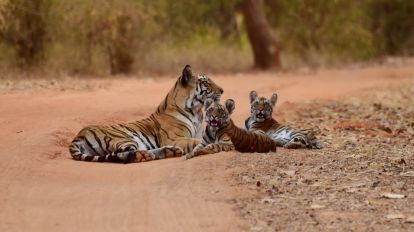 India Tiger Ranthambore National Park safari travel