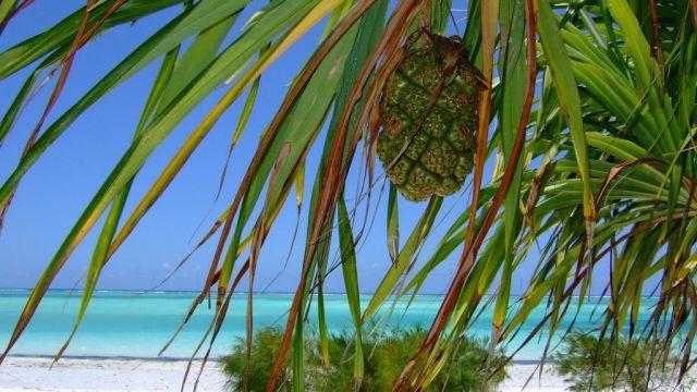 Africa Zanzibar Pineapple Beach Travel