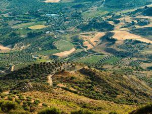 اليونان جبال كريت أشجار الزيتون السفر