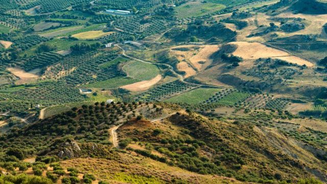 Greece Crete Mountains Olive Trees Travel