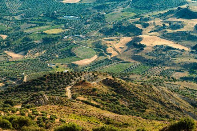 Řecko Kréta hory olivové stromy cestování