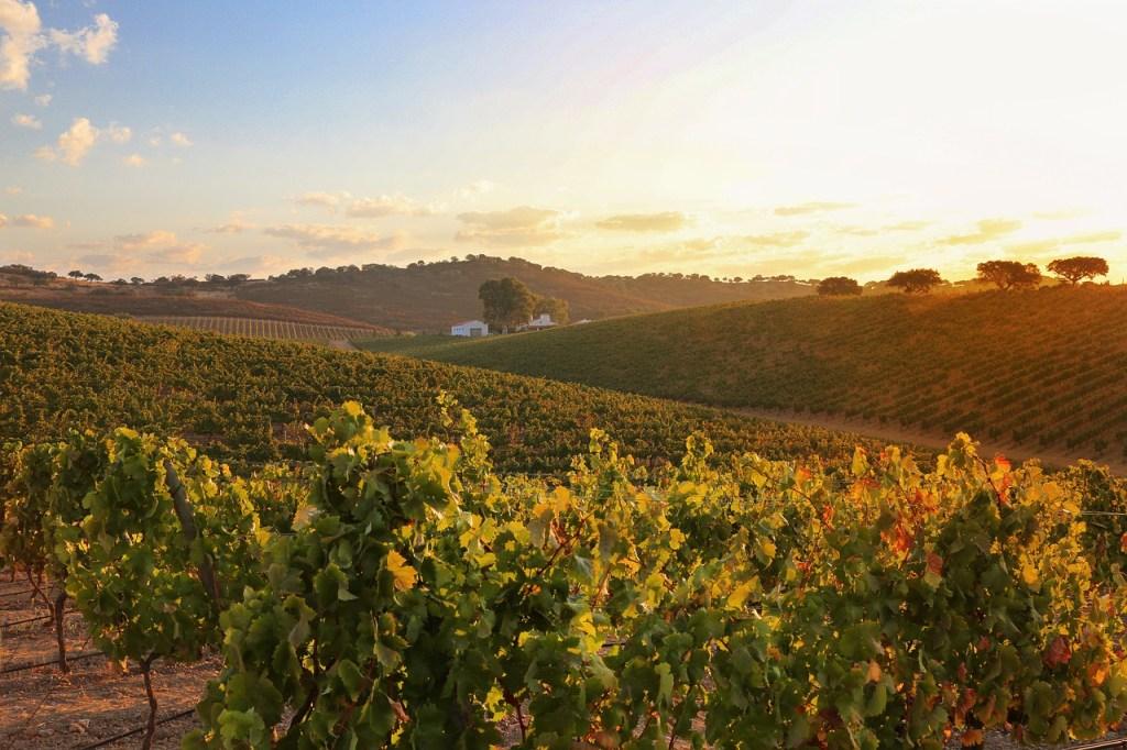 ポルトガルはアレンテージョのブドウ園旅行を配置します