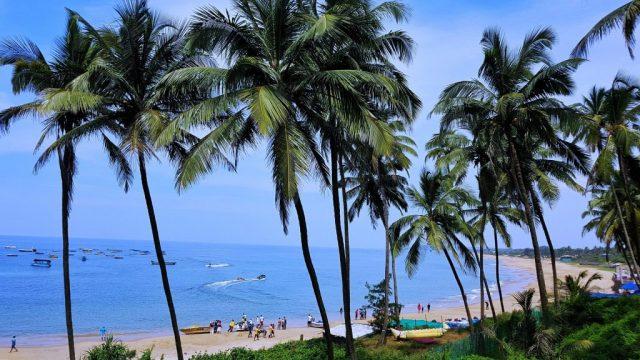 Hindistan - Goa, plaj, palmiye ağaçları - seyahat