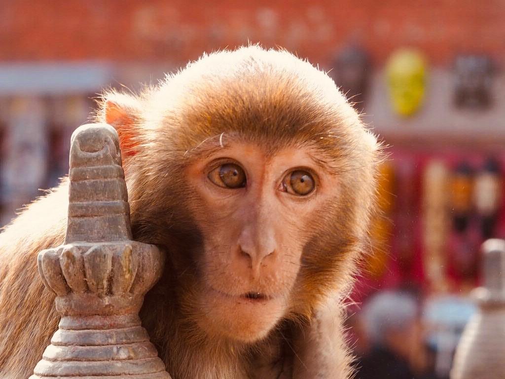 Nepal Swayambhunath Stupa rejser