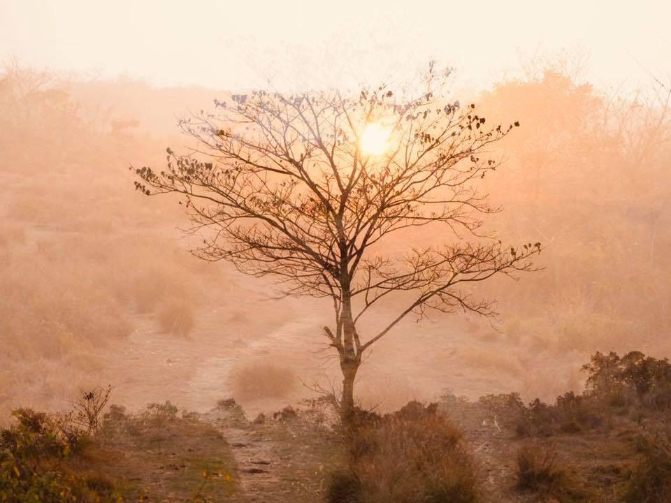 Nepal Chitwan national park træ solnedgang