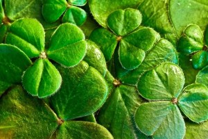 Ireland - shamrock, three-leaf clover - travel