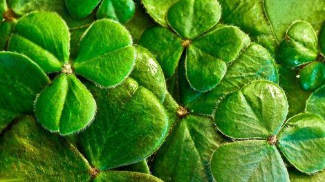 Irlande - trèfle, trèfle à trois feuilles - voyage