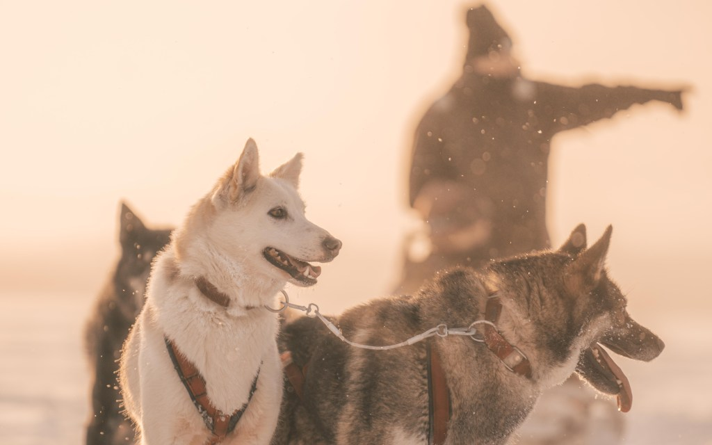 sweden norway green travel dog sled travel