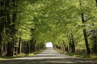 træer -rejser
