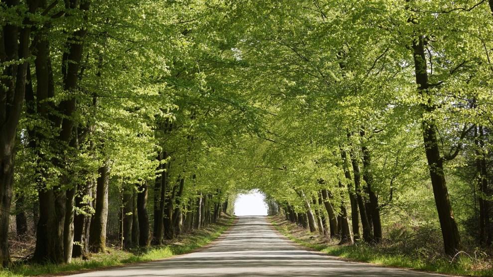 trær -reiser