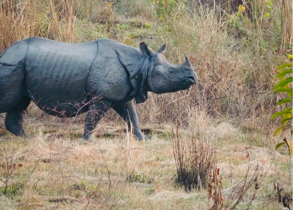 Nepal - Asien - savanne - dyr - rejser