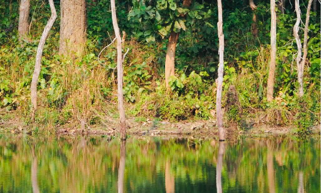 Nepal - Asien - vand - skov - park - træer - rejser