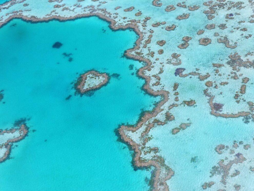 Stor barriere rev, Australia, korallrev, reise, vann