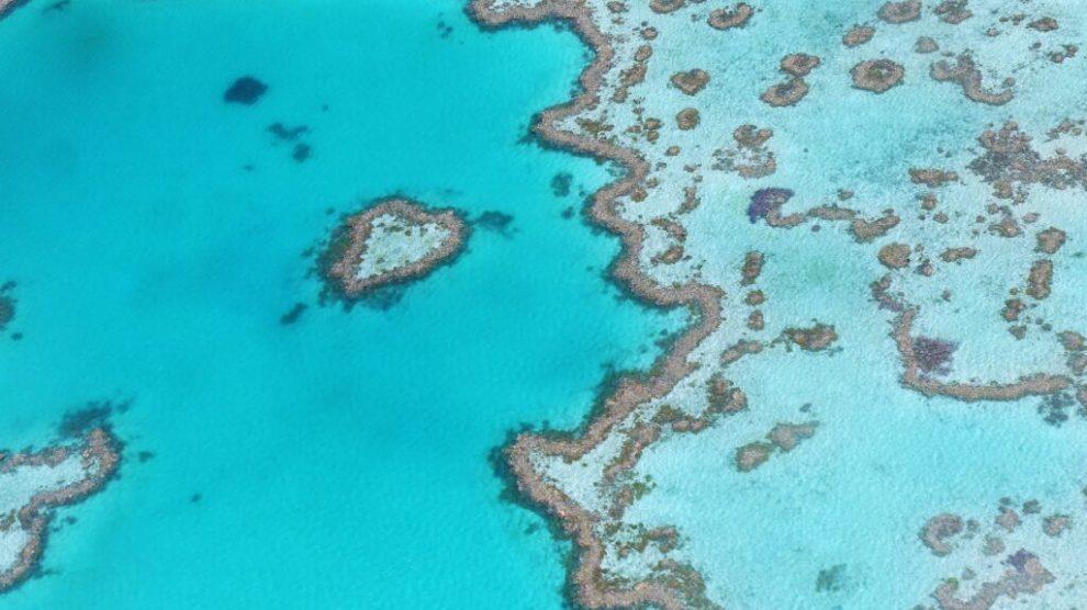 Great barrier reef, australien, koralrev, rejser, vand