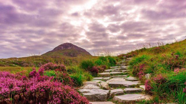 Irland - Connemara, vandring, sti - rejser