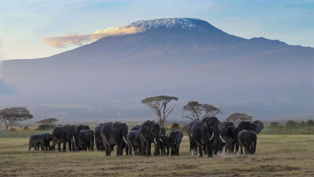 Kilimandžaro - Serengeti - Slonovi - Tanzanija - Afrika