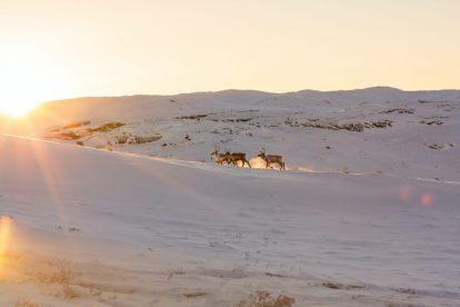 ग्रीनलैंड, कांगेरलुसुआक, हिरन, यात्रा