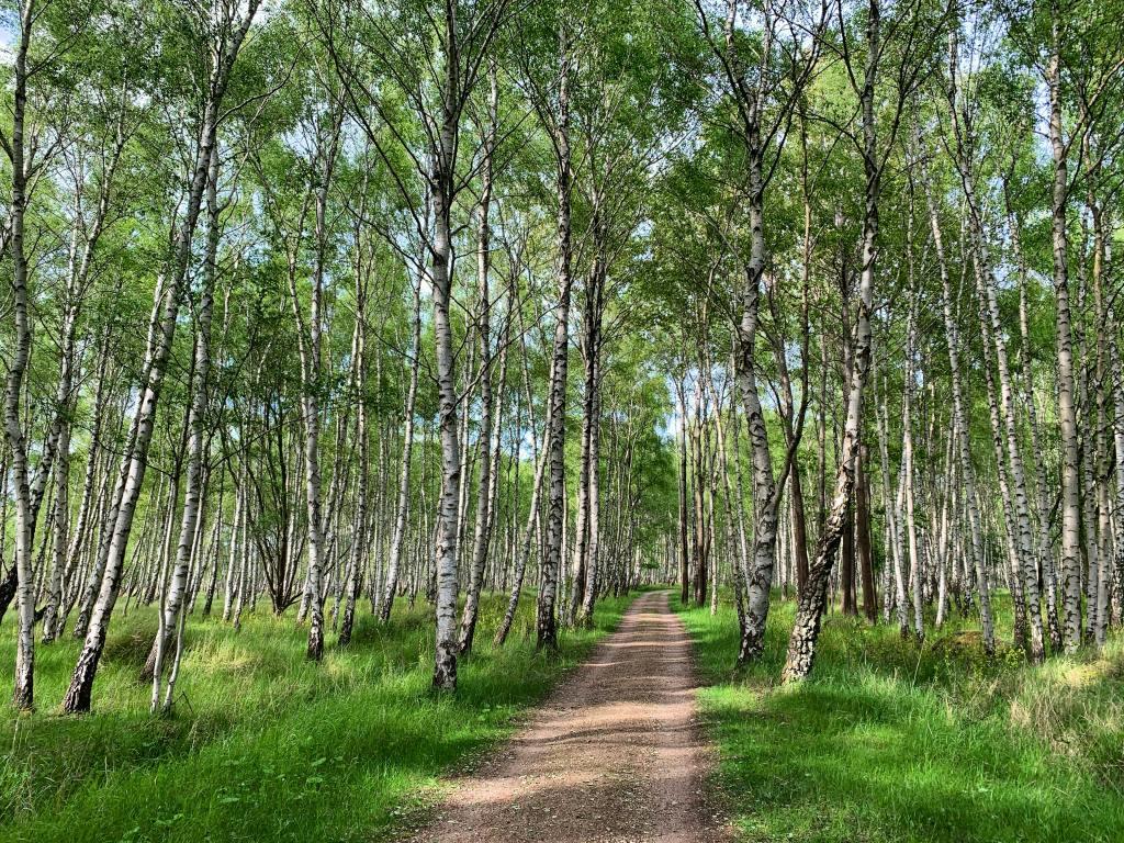 Danska, Amager, Fasanskoven, Amarminoen, pješačke rute, putovanja
