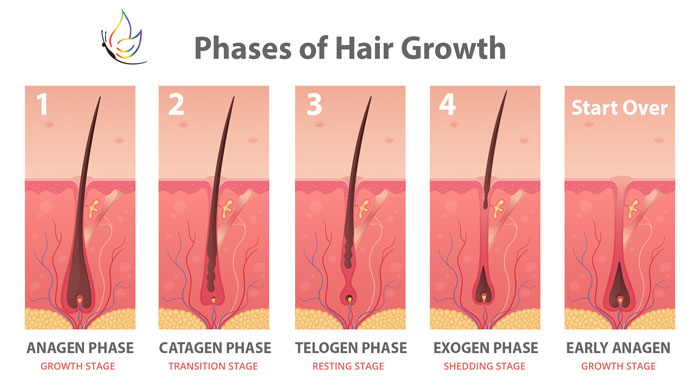 Hair Growth Anagen Phase