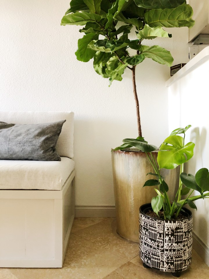 House plants, Fiddle leaf Fig, Monserata
