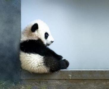 Atelier Petit Panda