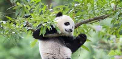Ateliers panda Zen - 10/13 ans