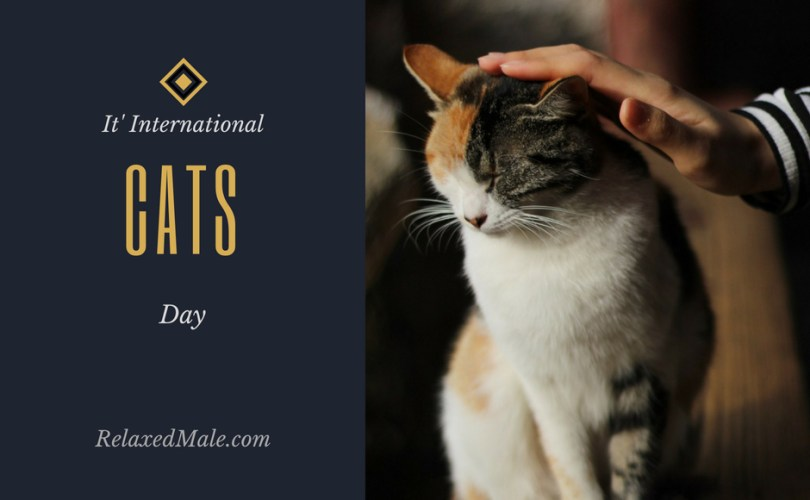 hooray for international cat day