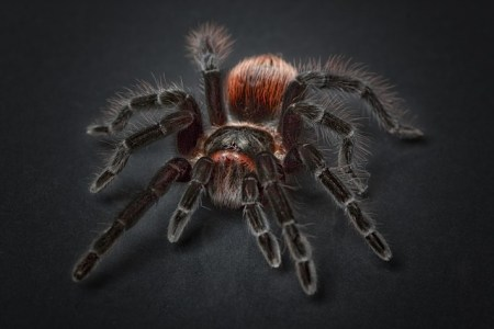 spider 1772769 640 450x300 The Problem with Fear of the Unknown