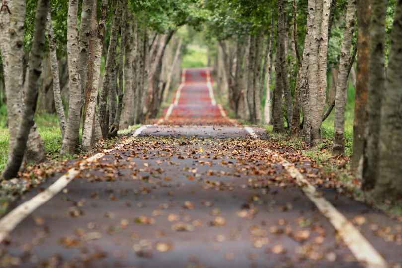 road nature trees branches