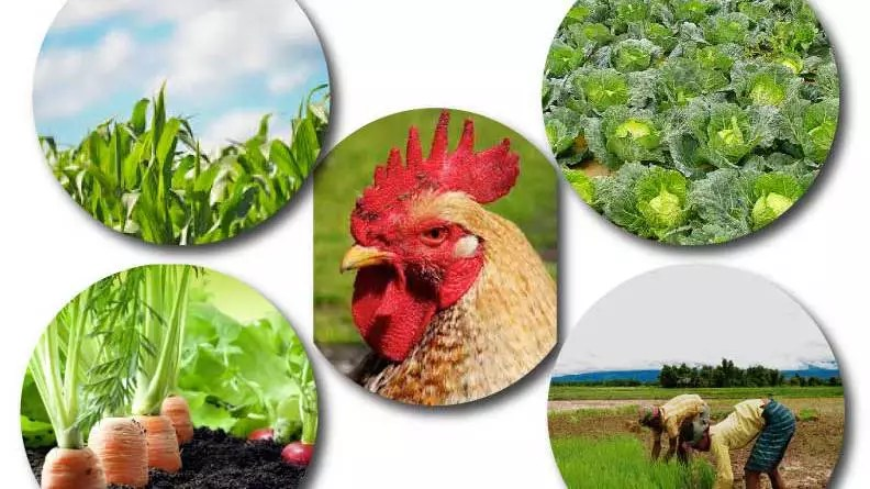 Importance of agriculture in nigeria,ten importance of agriculture,importance of agriculture essay,importance of agriculture Wikipedia,importance of agriculture in everyday life,10 importance of agriculture in Nigeria,importance of agriculture to the nation,importance of agriculture in national economy,importance of agriculture pdf