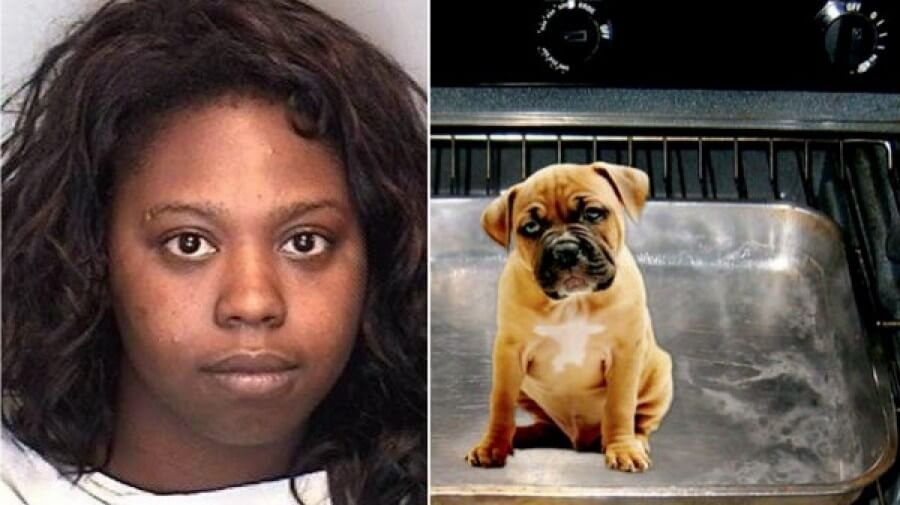 woman baked puppy
